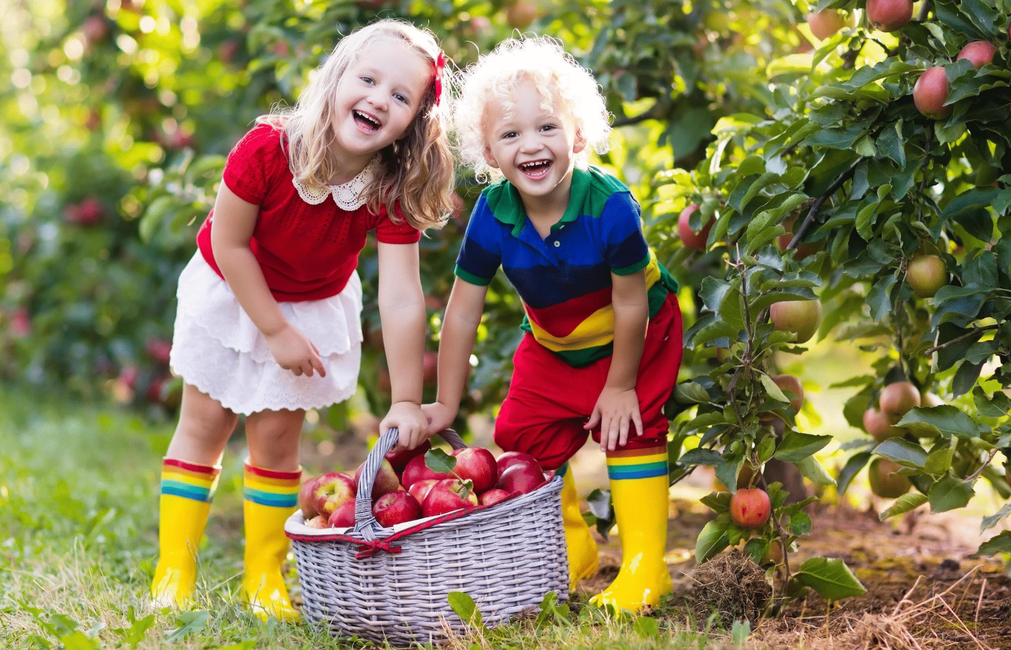Healthy kids picking apples